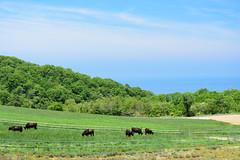 2Ikari Field Farm (anglo10) Tags: field japan kyoto seashore