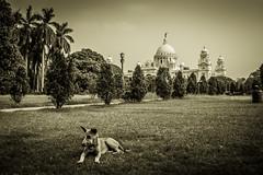City of Palaces (arkamitralahiri) Tags: travel trees people urban dog heritage beautiful sepia hall memorial victoria monuments kolkata bengal calcutta monoment