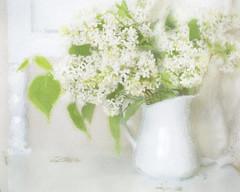 White lilac time. (BirgittaSjostedt) Tags: flower texture still paint bright pastel painted pot lilac card vase highkey ie flowercard magicunicornverybest birgittasjostedt