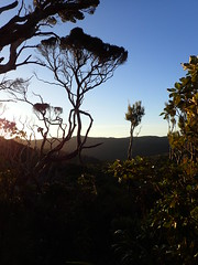 Sunset from the top of Gooseland Track (dracophylla) Tags: newzealand codfishisland whenauhoa