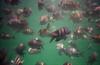 trindade (cocachimba) Tags: brazil sun beach water paraty trindade waterproofcamera