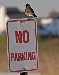sign_parking_bird_042715 (F J R) Tags: challengeyouwinner cyunanimous cy2