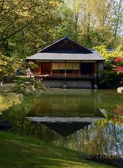 160504 pjH 160516  Ththi ( 4 pics ) (thethi (don't like beta groups)) Tags: architecture belgium belgique hasselt jardin reflet maison parc japon pavillon tang vlaanderen traditionnel
