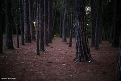 Parque Ibirapuera (Rafael Dolinski) Tags: parque brasil canon 50mm br monumento sopaulo s ibirapuera rafael 6d bandeiras dolinski