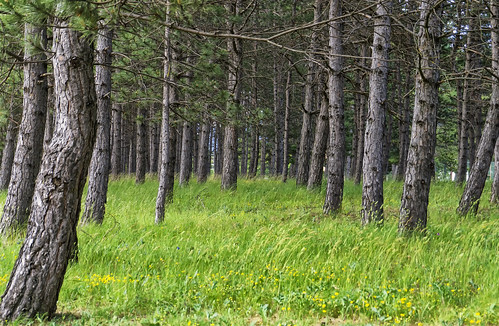 Era un pequeño claro del bosque....