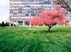 0014025_0014025-R1-E008 (elsuperbob) Tags: mamiya architecture spring kodak michigan detroit modernism miesvanderrohe lafayettepark m645 ektar100