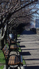 A Very Brisk Walk on Roosevelt Island, Along East River - IMGP4175 (catchesthelight) Tags: skyline buildings manhattan bluesky views promenade eastriver benches rooseveltisland floweringtrees newyorkcityny springvisit april2016