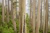 Mystic Forest Workshop with Michael Frye (PrairieIce60) Tags: california fog canon landscape coastal redwoods klamathriver ef24105mmf4 5dsr