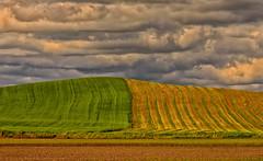 Fields (sunrisesoup) Tags: usa hills fields wa palouse