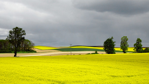 Rapeseed field & stormy clouds