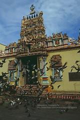 Penang, Sri Mariamman Temple (blauepics) Tags: city houses birds animals architecture buildings temple tiere colours religion sri malaysia stadt architektur penang hindu vgel gebude malay doves farben tempel huser tauben pigdeons mariamman