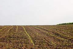 agriculture minimalism