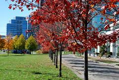 fall_267 (Sascha G Photography) Tags: autumn trees toronto color tree fall leaves leaf nikon seasons waterfront lakeshore indiansummer d60