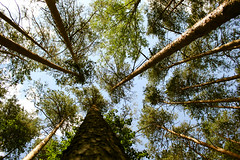 # () Tags: wood trees sky plant tree nature pine forest landscape grove foliage      bosk   branchlet