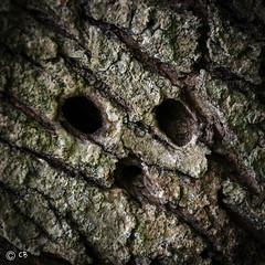 Crâne.jpg (BoCat31) Tags: visage écorce arbre trou