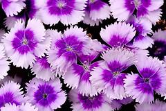 Flowers! (HSS) (WilliamND4) Tags: flowers flower nikon d750 hss tokina100mmf28atxprod tokina100mmf28lens sliderssunday