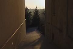 Yes, I'm sentimental (maciej.zdun) Tags: light sunset shadow sky orange tree alley poland romantic sentimental tyczyn