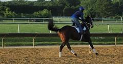 Feeling frisky (susanmbarlow) Tags: horse animal racetrack photograph horseracing delaware racehorse thoroughbred equine gallop equus delawarepark equidae equusferuscaballus delparkracing