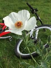 (Jorge Uriostegui) Tags: bike bicicleta milpaalta