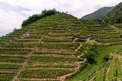 Vineyard (petia.balabanova) Tags: travel sky color green nature landscape switzerland vineyard ticino svizzera montains 2470mm nikond800