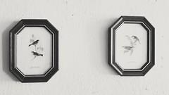 Details in home (adrianapereira24) Tags: details decoration birds grafite blackandwhite decorao detalhes home casa house pssaros animais animals brancoepreto art arte photography fotografia beatiful magnificent life vida