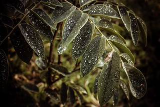 #297 of 365 days - Waterdrop and leaves