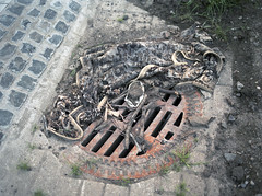 (laurentgaudart) Tags: film trash carpet photography ground manhole bochum ruhrgebiet foundsculpture mamiya645protl sculpturetrouve laurentgaudart