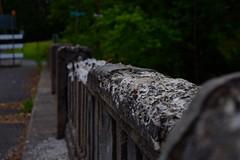 DSC_0305 (moyer.gabriel) Tags: bridge abandoned nature water girl model nikon cabby