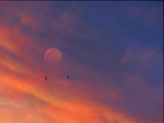 Me parece... (anitareal) Tags: argentina azul atardecer nikon foto aves luna cielo nubes naranja ocaso mundo anamaria jujuy airelibre crepsculo pjaros