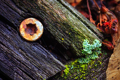 The gate (WickedVT) Tags: wood macro home burlington yard fence screw outside moss rust vermont