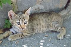 Ari~ | Arisa (Iriem~) Tags: cats cute gatos arisa muakiss