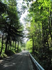 Parco nazionale della Majella  5 (Aldo433) Tags: flowers italy parco alberi italia natura della montagna abruzzo appennino bosco majella maiella nazionale ortona