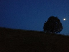 Good Night (K M V) Tags: blue moon tree night goodnight nightsky grainy solitary solitarytree summernight buonanotte buenasnoches bonnenuit gutenacht godnatt dobrounoc hyvääyötä lalasalama somethingblueinmylife spokoinoinochi