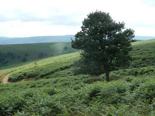 Abergavenny: Sugar Loaf walk (Monmouthshire)