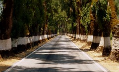 road (poljacek (more than 1M visits, many thanks!)) Tags: road portugal carretera perspective perspectiva vanishing alentejo droga portugalia perspektywa salonpolski