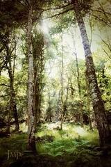 El Bosque (josemanuel_polanco) Tags: naturaleza sol canon paisaje bosque rayo cantabria ucieda uploaded:by=flickrmobile flickriosapp:filter=nofilter