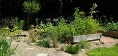 Raised beds (Karen @ Wall Flower Studio) Tags: ontario gardening landscaping august pathway haliburton gardenpath herbgarden vegetablegarden raisedbeds droughttolerant xeriscaping 2013 karensloan wallflowerstudio