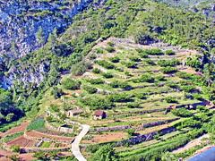 Pratdip - Terrassenanlagen (Martin Volpert) Tags: españa spain catalonia catalunya espagne spanien baixebre catalogna katalonien catalogne catalunja pratdip mavo43