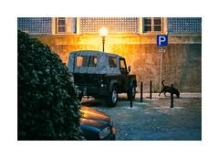 Lisboa - Campo de Ourique (Sr. Cordeiro) Tags: street light dog luz co portugal car nikon streetlamp lisboa lisbon carro rua nikkor f18 suv v1 candeeiro jipe campodeourique 185mm