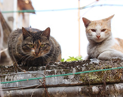 Today's cat 2014.1.2 (ladious666) Tags: life animal cat alive catsplanet