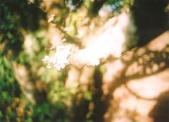 (Lolita Storm) Tags: trees naturaleza nature photography photo pentax k1000 bokeh details analogica analogic
