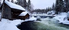 Myllykoski [explored] (timo_w2s) Tags: winter snow finland river nationalpark kuusamo oulanka kitkajoki pienikarhunkierros juuma