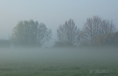 070416 baH 140219 © Théthi (thethi: pls read my first comment, tks) Tags: nature brouillard matin rural paysage campagne arbre atmosphère météo hainaut wallonie belgique belgium bestof2007 inthesky ruby20 setavril setrural fact40 setvosfavorites faves52 sethainaut