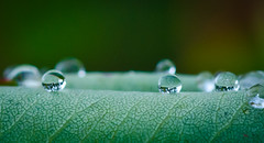 Morning Rain Drop's. (Omygodtom) Tags: park wild macro green art texture nature leaves oregon season leaf nikon dof bokeh raindrop tamron90mm d7000