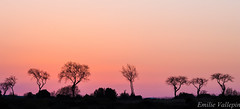 An air of Savanna (Lalykse) Tags: pink trees sky france spring south ciel arbres provence printemps sud savanna garrigue 70300 nikond3200 savane