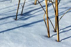 (Abel AP) Tags: usa snow nature canon reeds illinois shadows greatlakes dslr greatlakesil eosrebelt3i abelalcantarphotography