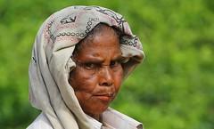 Tea Plantation Worker (58) (Richard Collier) Tags: people srilanka teapicker