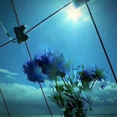 Accidental Cornflower Picture (The Image Den) Tags: sunlight glass cafe accident artificial odd portsmouth spinnakertower faux bouquet fakeflowers glazing cornflowers computerglitch cornflowerblue outofmycontrol elements8 healingbrushfrenzy