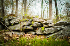 Over the Rock Wall (Rodrigo Montalvo Photography) Tags: wood flowers shadow summer plants white green nature rock wall contrast forest 35mm happy photography spring woods nikon bokeh earth connecticut emo over dramatic explore wilderness f18 rodrigo drama newtown recent rockwall montalvo proffesional explored d3200 unexplored unflickered