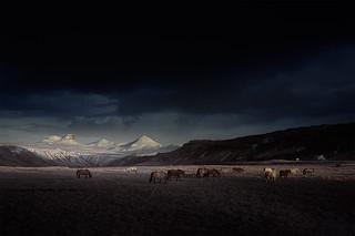 ⁜ bunch of horses